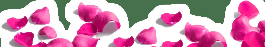 Лепестки роз картинка - с днем рождения