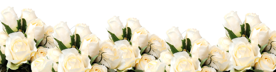 Белые розы пастору Галине на День Рождения в 2018 картинка
