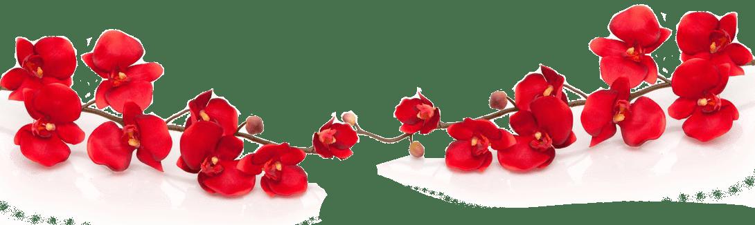 Орхидея пастору Босе на день рождения 02.2019 картинка